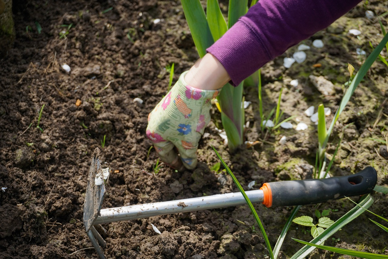 The 9 Best Gardening Tips And Tricks For Beginners - The Plant Guide