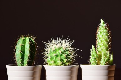 Plants Create Positive Energy cacti