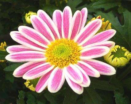 Plants Create Positive Energy