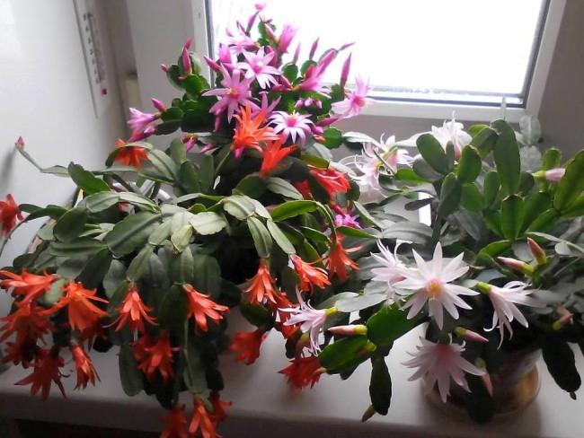 flowers castor oil