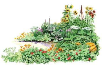 self-seeding-plants-1