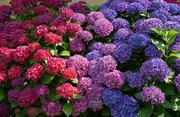 flowers-2062232_640