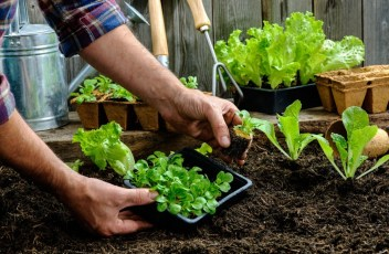 Vegetable Garden throughout Starting A Vegetable Garden