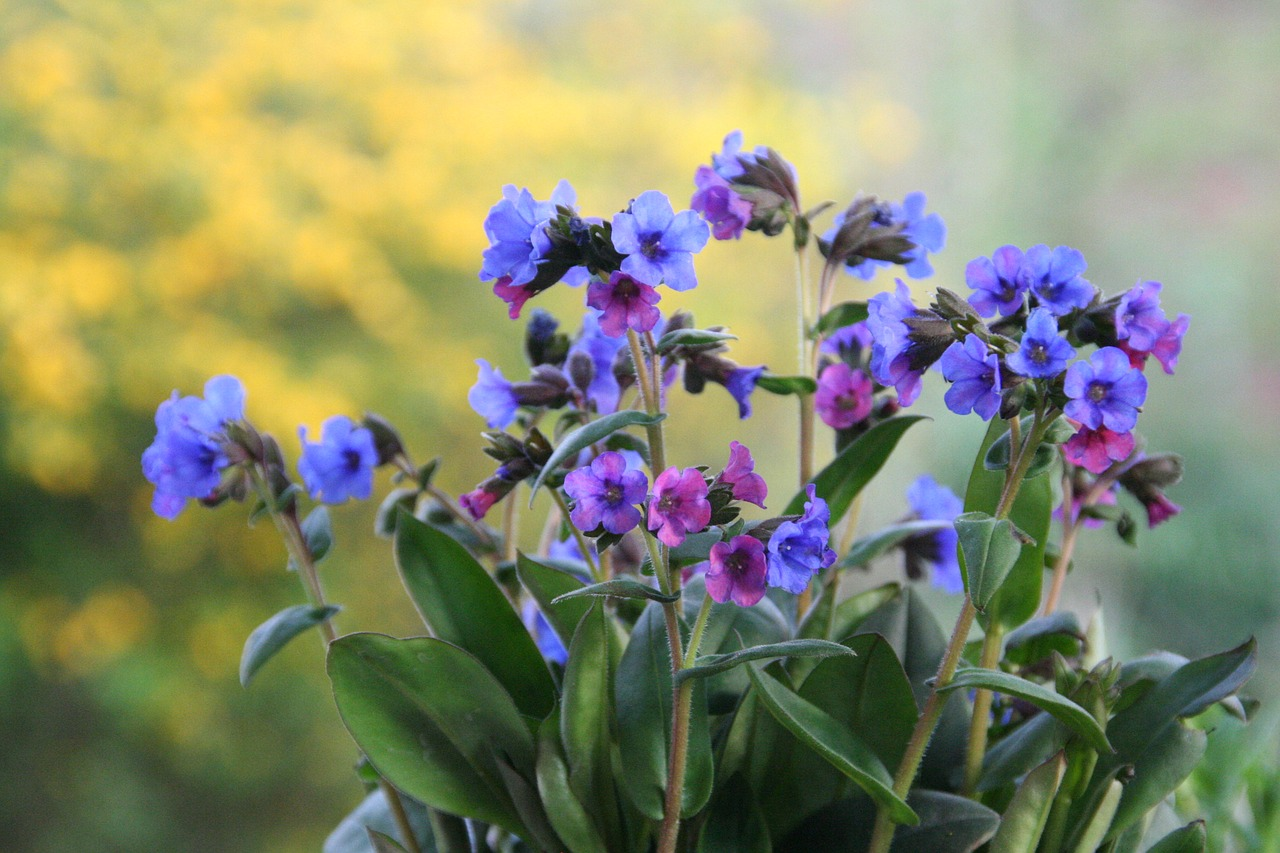 9 Colorful Flowers That Grow In Shade The Plant Guide