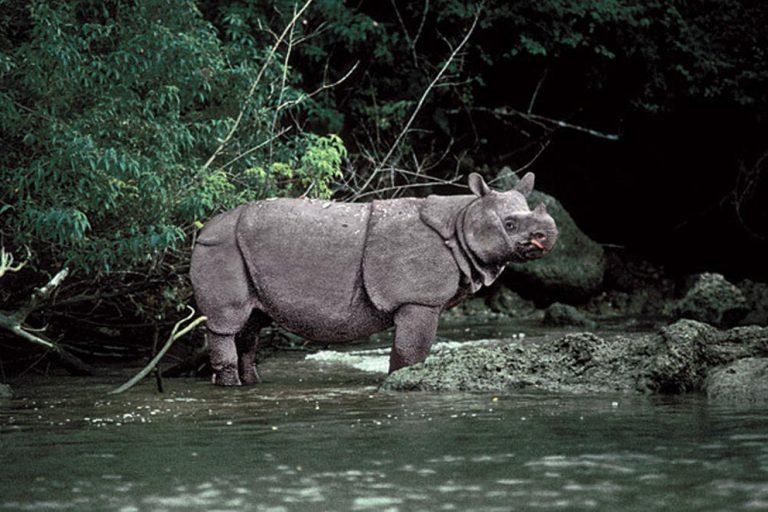poaching rhino horn