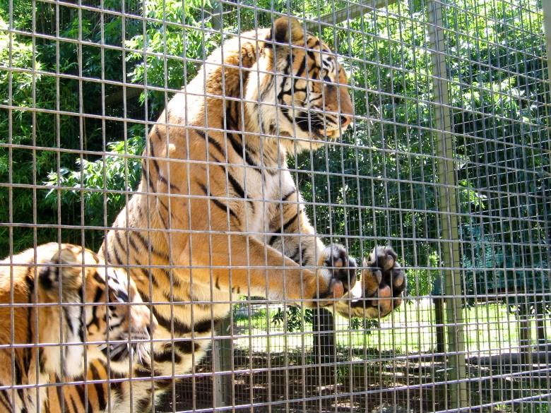 animals belong in zoos