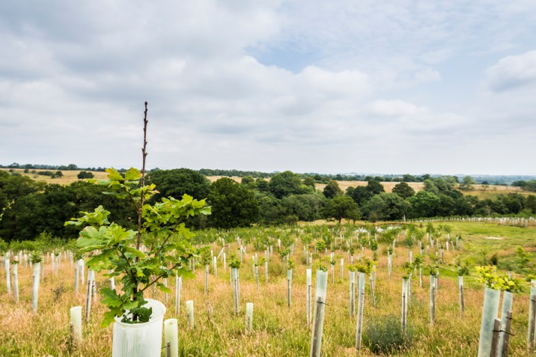UK Government plants trees