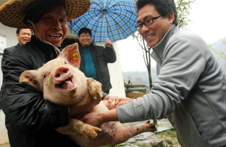 Pig Tickling