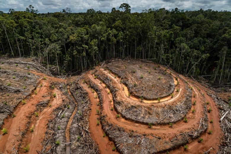 Orangutans government