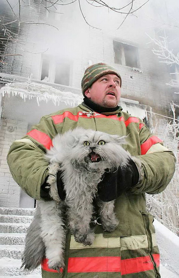 Cats Firemen