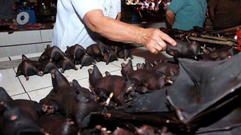 Bats in Wuhan