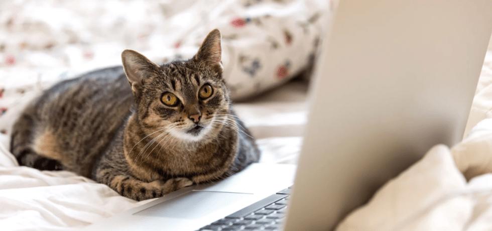Animals Uncover Secret