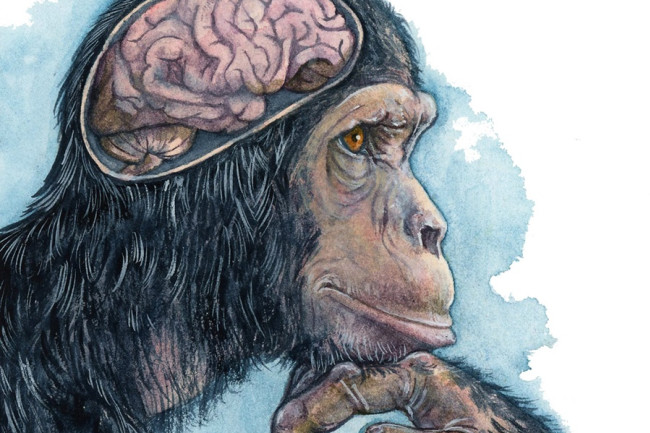 Why Would Only One Mammal Possess Intelligence and Complex Emotions?