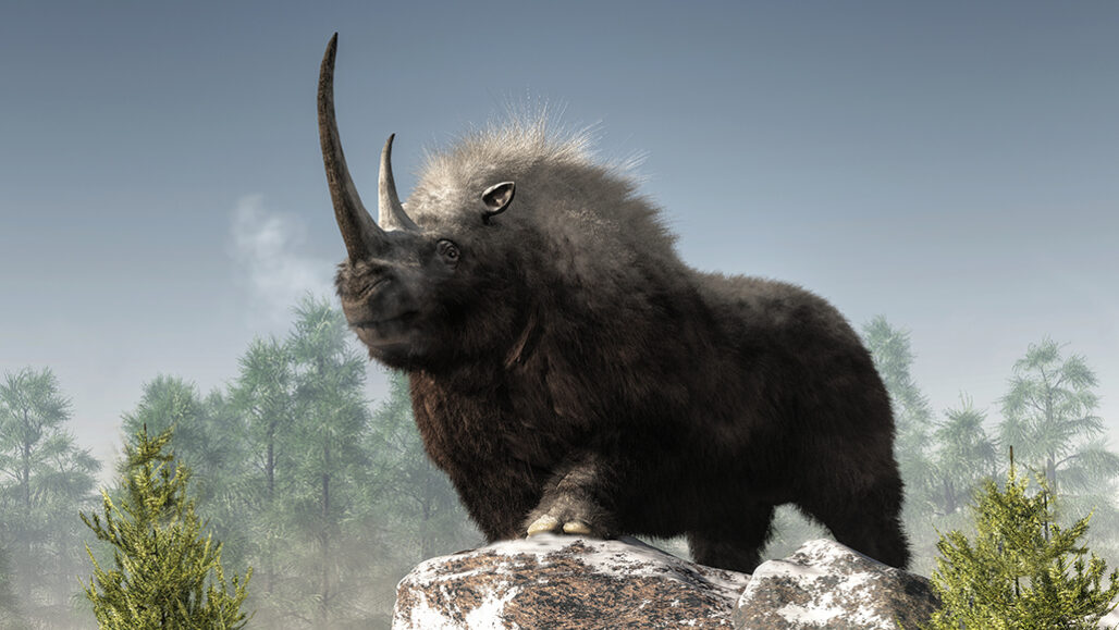 What Happened to the Woolly Rhino?