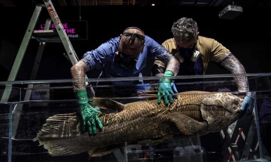 Are Coelacanths Extinct?