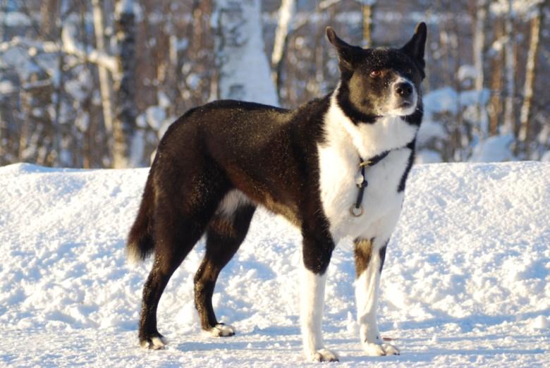 5 Extinct Dog Breeds