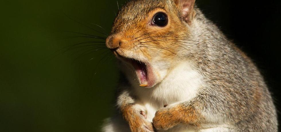 Squirrel Gets