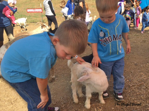 COX FARM ANIMALS.jpg