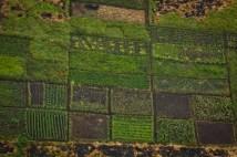 Garden patchwork
