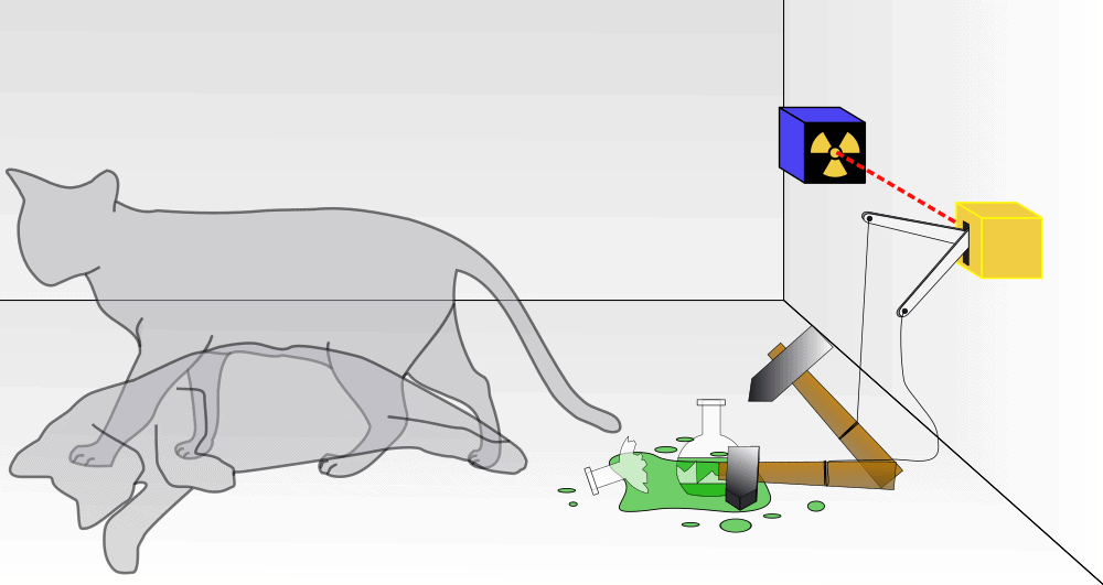 Curiosity Did Not Kill Schrödinger's Cat