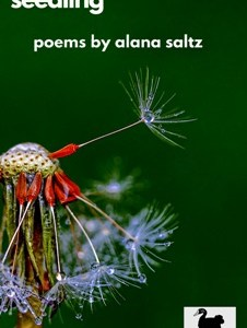 REVIEW: SEEDLING – ALANA SALTZ (MAVERICK DUCK PRESS)