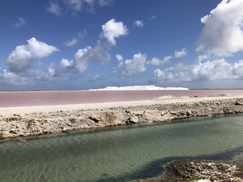 Pink Salt Ponds of Bonaire