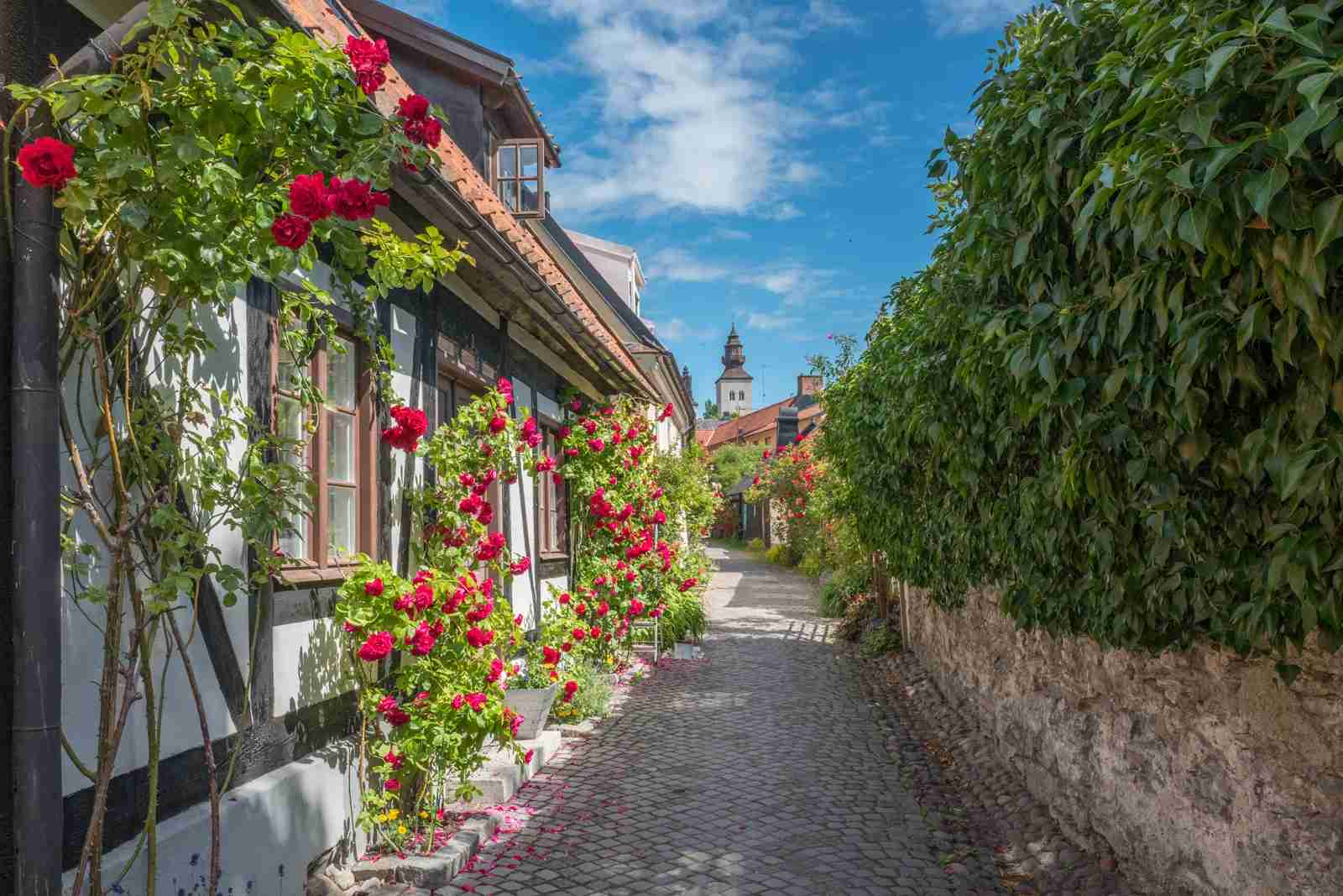Medieval alley in Hanse town Visby, Sweden. (Photo by Rolf 52 / Shutterstock)