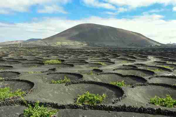 The volcanic vineyards in La Geria, Lanzarote. (Photo by Smartshots International / Getty Images)