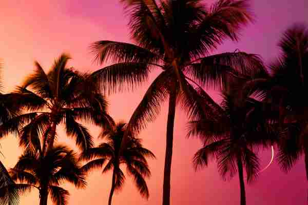 Miami palm trees in the sunset (Photo by  Sebastian Doerken/Getty Images)