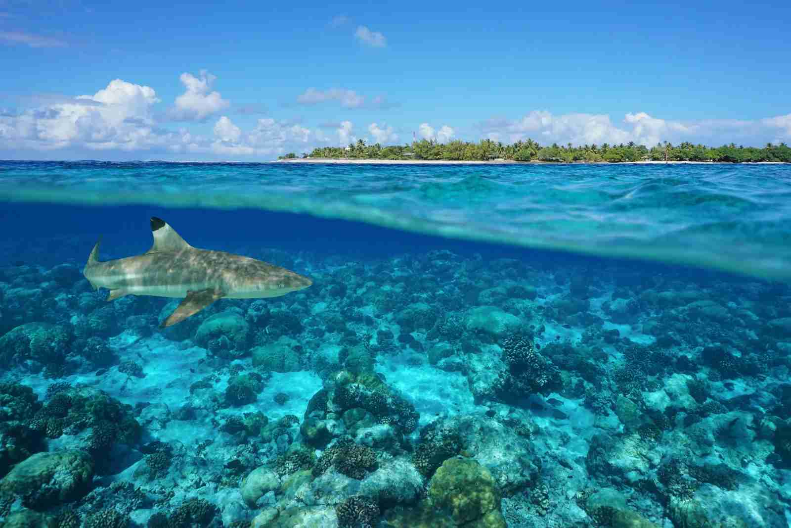 Tiputa pass at the Rangiroa atoll in French Polynesia. (Photo by Poly Damocean/Getty Images)