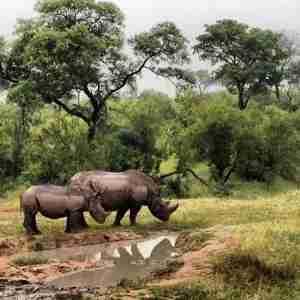 The rhinos didn