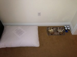 While the St. Regis Monarch Beach did give us an underwhelmning room with a view of the parking lot, they did try to woo him over with his own bed, bone and bottled water!