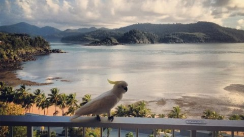 Hotel Review: Hamilton Island Reef View Hotel Coral Sea View