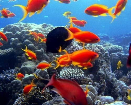 Snorkel in the Red Sea in Safaga, Egypt