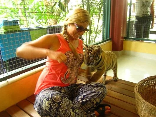 Playing with a baby tiger is sort of like playing with a cat...with sharper teeth