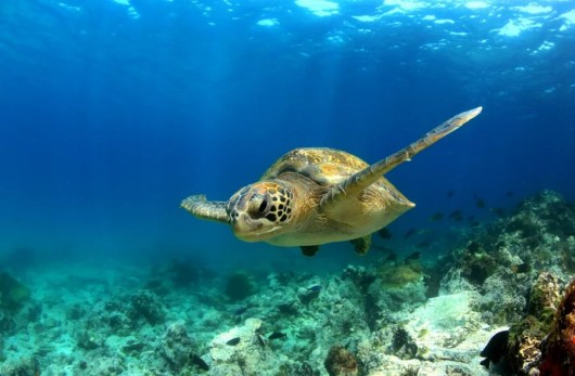 Win a trip to the Galapagos Islands. Photo courtesy of Shutterstock.