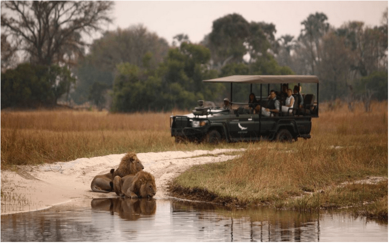The Okavango Delta is teeming with wildlife and big game. Photo courtesy of &beyond Sandibe.