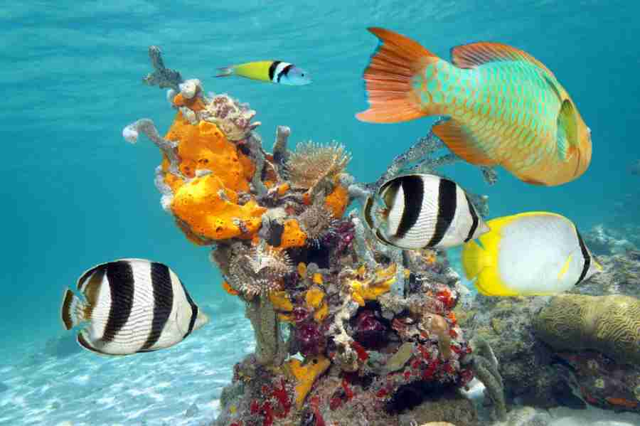 Cuba as a diving site is relatively unknown, but it
