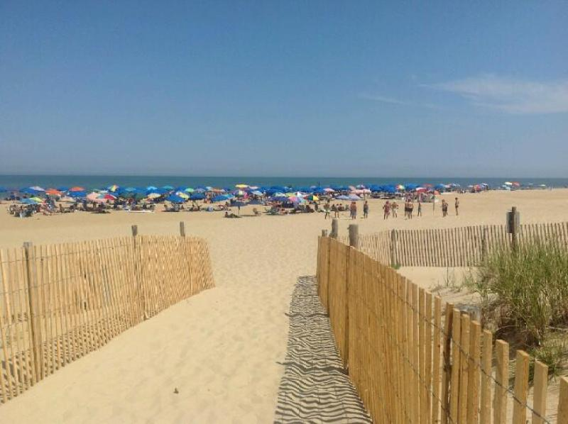 Poodle Beach in Rehoboth Beach, Delaware.