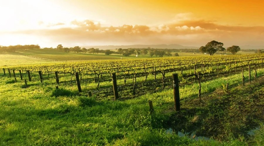 Napa vs Sonoma: Which Wine Country Is Right for You?