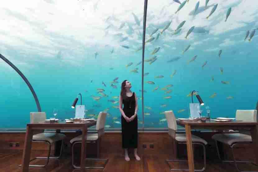 Ithaa Underwater Restaurant - Feeding