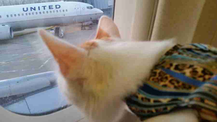 Some cats are fascinated by flying. (Photo courtesy of Nikki Crandall-Seibert)