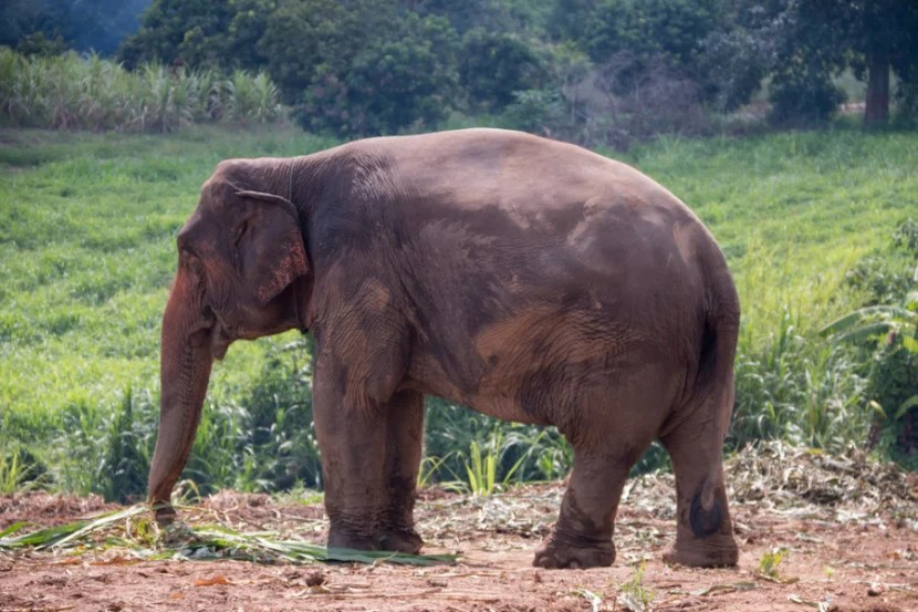If you want to interact with elephants, do it in a ethical way. Photo courtesy of Shutterstock.