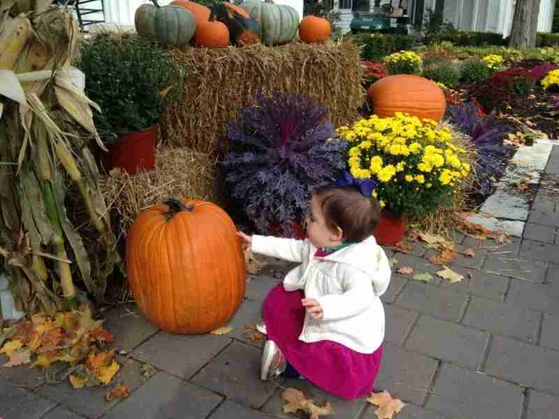 Evy was fascinated by the pumpkin display at the front entrance of the resort.
