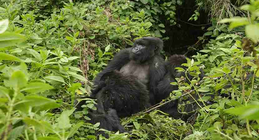 I never thought I would be able to get up close with gorillas in Rwanda, but I can