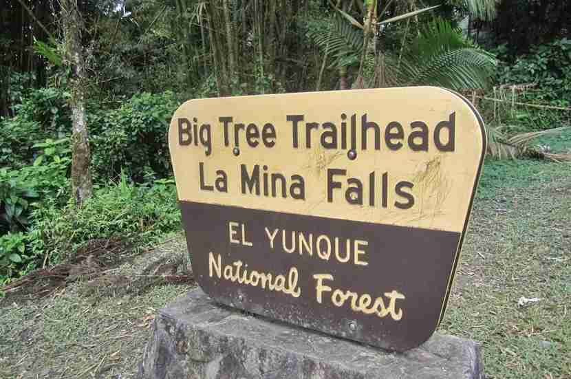 One of the shorter trails at El Y unque.