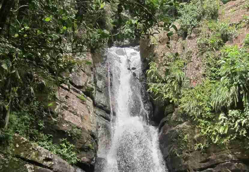 You can reach the waterfall by hiking along a paved trail in El Yunque.