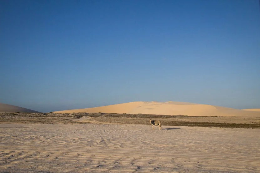Sand dunes in Jericoacoara, Brazil. Image by the author.
