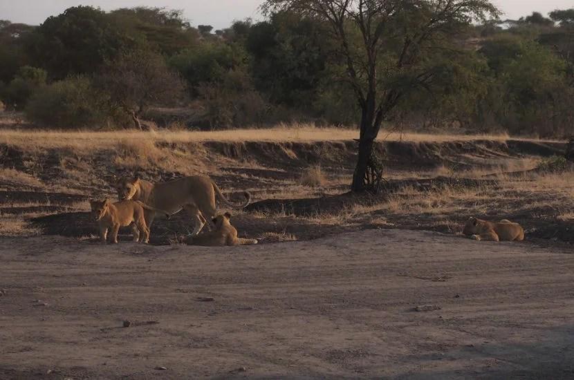 My Negative Experience at &Beyond Safari in Tanzania