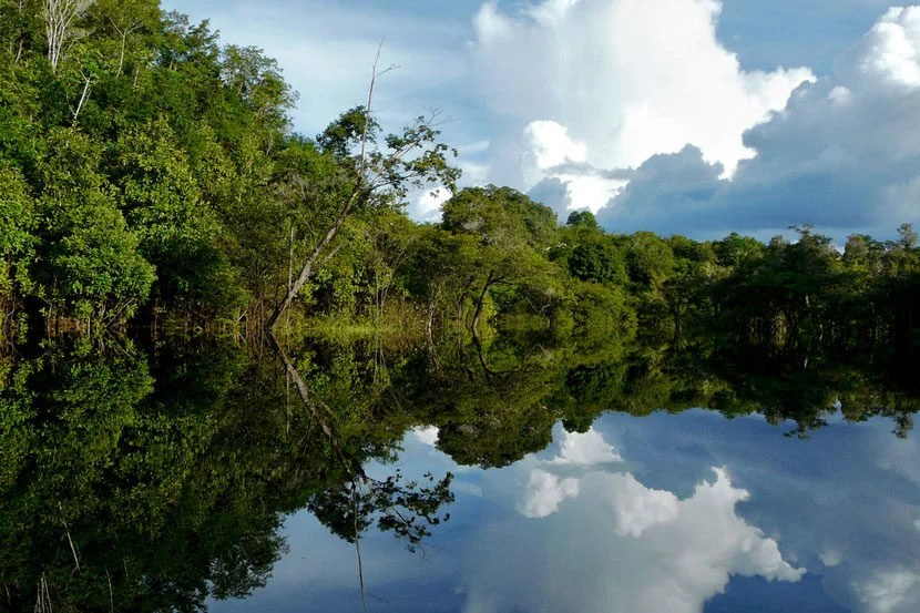 """The Amazon River, image courtesy of <a href=""""http://www.shutterstock.com/pic-58189210/stock-photo-amazon-river-brazil.html?src=zNbFvg4uNdfsdAbgnTuicw-1-2"""">Shutterstock</a>."""